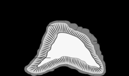 Diagram of inside an adrenal gland