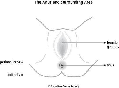 Diagram of the anus and surrounding area