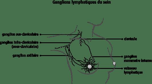 Schéma des ganglions lymphatiques du sein