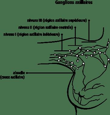 Schéma des ganglions axillaires