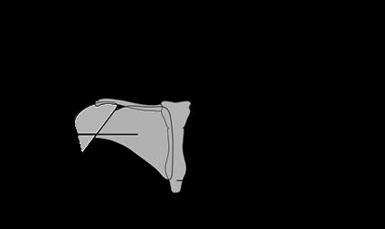 Schéma du sein et de ses structures voisines
