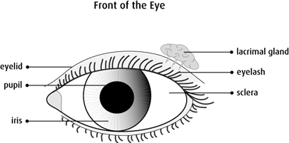 Graphic of the front of the eye