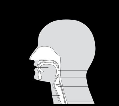 Schéma de l'emplacement du larynx