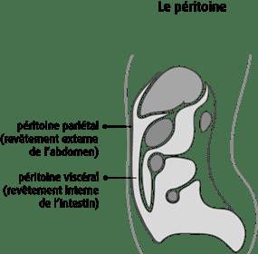 Schéma du péritoine