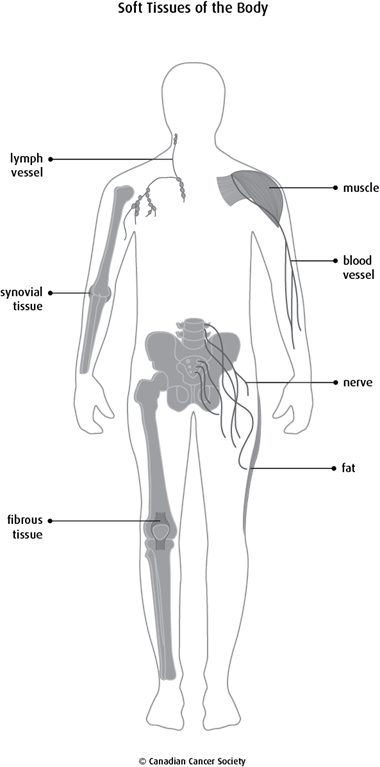 Diagram of the soft tissues of the body