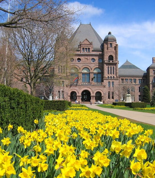 The Canadian parliament building with a daffodil garden in the foreground