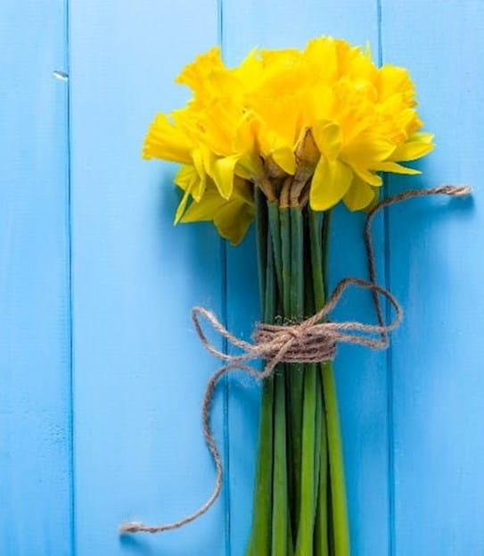 Bouquet de jonquilles sur fond bleu.
