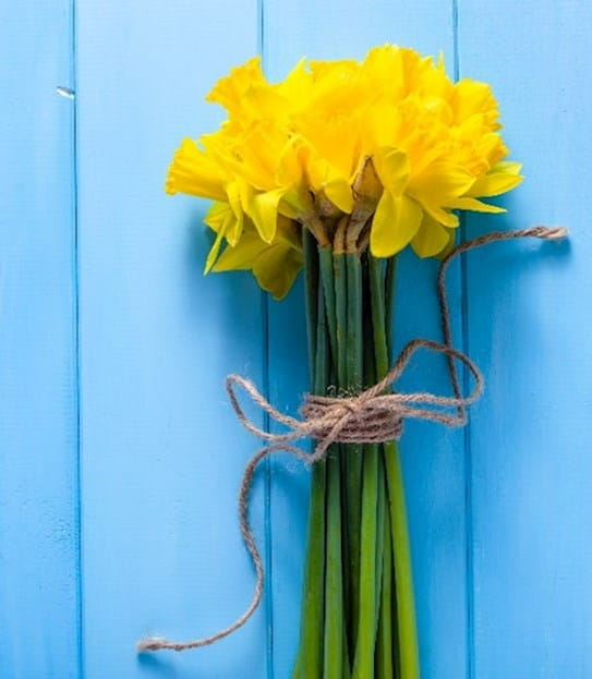 A bouquet of Daffodils set against a blue painted backdrop