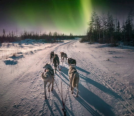 A team of six sled dogs running at night with green northern lights in the sky